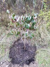 edge of the woods native plant nursery improving on nature