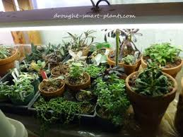 Grow Lights For Plants Grow Lights Supplemental Light Sources For Succulent Plants