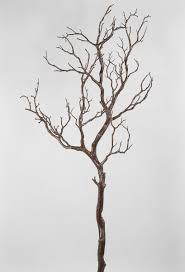 manzanita tree manzanita tree branches brown 38 5in