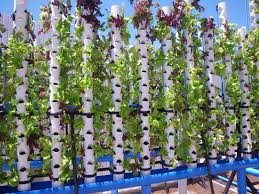backyard aquaponics u2022 view topic ratio of grow beds to to ft u0027s