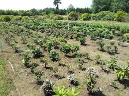 singing tree gardens nursery rare u0026 exotic plant nursery