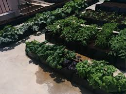 Strawberry Garden Beds Growing Strawberries How To Grow Strawberries Using Hydroponics