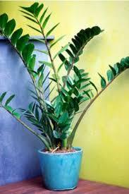 best low light indoor trees art vase decor pinterest more gardens ideas