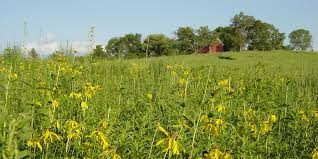 native iowa plants tallgrass prairie herbert hoover national historic site u s