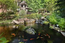 the essentials of koi pond design u0026 maintenance in northern