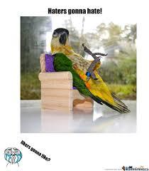 Parrot Meme - parrot swag by ettena90 meme center