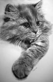 imagenes a lapiz de gatos dibujos de gatos hechos a lápiz