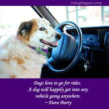 Famous dog travel quotes