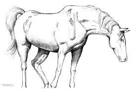 untitled horse sketch 3 art blog