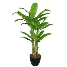 Laura Ashley Home Decor Laura Ashley 78 In Tall Banana Tree With Real Touch Leaves In 16