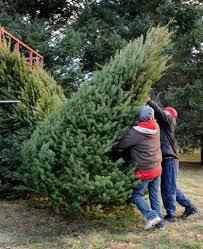 o christmas tree the search newstimes