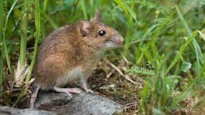 rodent removal los angeles ca pest removal nj