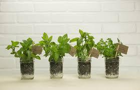 Indoor Herb Garden Kit Indoor Herb Garden Pyihome Com