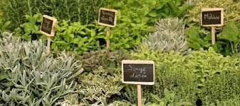 les herbes aromatiques en cuisine entretenir les plantes aromatiques