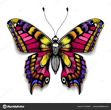 beautiful for your chest colorful machaon butterfly