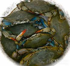 blue crabs in myrtle beach south carolina seafood