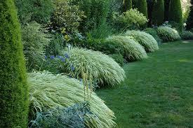 shade garden ideas photograph ornamental grasses for