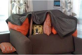 Blanket Fort Meme - breading cats meme takes off page 4 neogaf