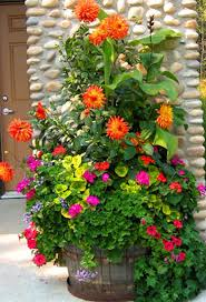 amazing flowers for containers in cottage garden with wooden bench