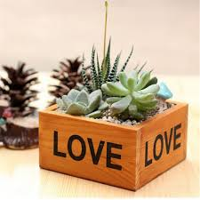 Succulent Kits by Compare Prices On Herb Garden Kits Online Shopping Buy Low Price