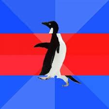 Socially Awkward Penguin Meme Generator - socially awk awe awk penguin meme generator imgflip
