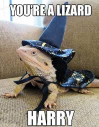 Lizard Meme - meme 2014 lizard