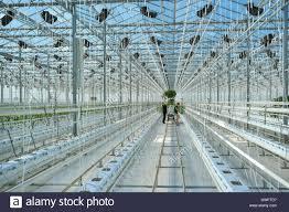 bogatynia poland 12th sep 2016 citronex company greenhouse in