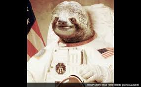 Astronaut Sloth Meme - sloth conquered the internet now he s going to the moon
