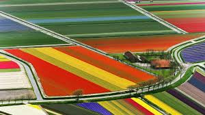 Tulip Field Field Of Tulips Germany Travel And World Wallpaper Wicked