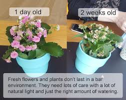 Plants That Don T Need Natural Light by Fresh Flowers Versus Artificial Flowers For A Restaurant