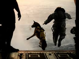 belgian shepherd us army sniffing out bombs america u0027s most elite dogs youtube