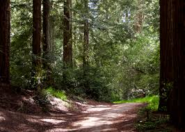 join the great american backyard campout save the redwoods league