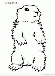 groundhog coloring sheet timykids
