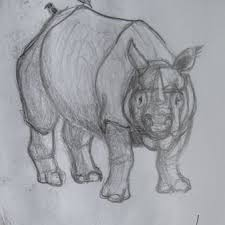 nature sketching rhinoceros research it u0027s sabby g