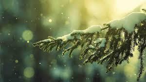 white christmas lights cheminee website