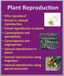 plant reproduction grade 8 10 biology powerpoint lesson by