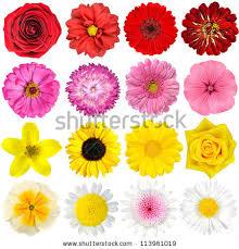 Flower Image Flower Stock Images Royalty Free Images U0026 Vectors Shutterstock