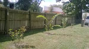 my tree gallery the arbor day foundation