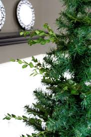the yellow cape cod boxwood tree tutorial how to keep real green