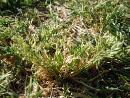 how to get rid of weeds in southern california install it direct