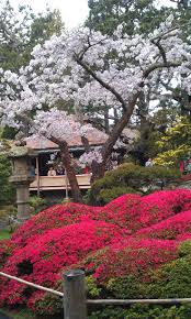 Best Public Gardens by 162 Best San Francisco Japanese Tea Garden Oldest Public Japanese
