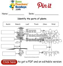 13 best year 1 plants lesson plans worksheets and teaching