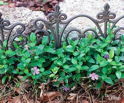 Best Plants For Rock Gardens Best Plants For Rock Gardens Walled Garden Gardens And Plants