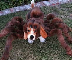 Spider Halloween Costume Dogs Spider Dog Costumes Spider Dog Costumes Spider Dog Spider