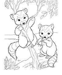 wild animal coloring pages bandit face raccoon coloring pages
