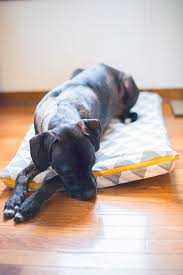 Burrowing Dog Bed Sew A Washable Dog Bed Cover With Just A Yard Of Fabric Bloggers