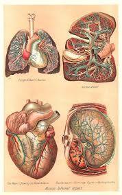 this is a color plate from a vintage medical and health book