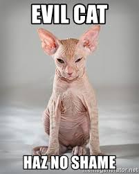 Evil Cat Meme - evil cat haz no shame hairless cat meme generator