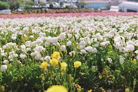 carlsbad flower garden halliedaily travel style ootn dinner night the flower