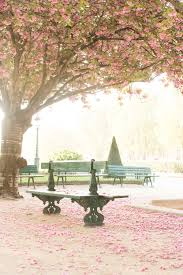 10 places to see the cherry blossoms bloom in paris u2014 every day